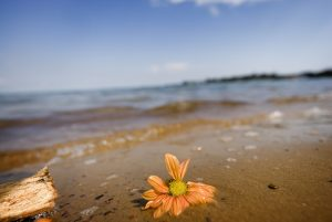 Lake Victoria Beach With Flower